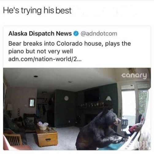 hes-trying-his-fucking-best-you-bitch-alaska-dispatch-news-atadndotcom-bear-breaks-into-colorado-house-plays-the-piano-but-not-very-well-adncomnation-world2-canary-P4bVV